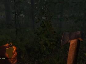 Baume In The Forest Und Ihre Eigenschaften
